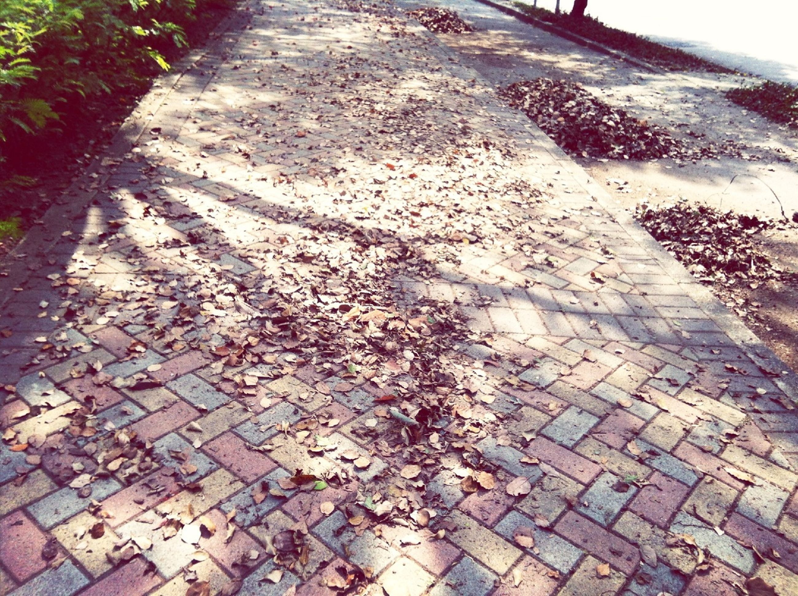 cobblestone, footpath, high angle view, paving stone, the way forward, sunlight, street, shadow, growth, plant, outdoors, day, walkway, nature, sidewalk, tranquility, no people, road, tree, leaf
