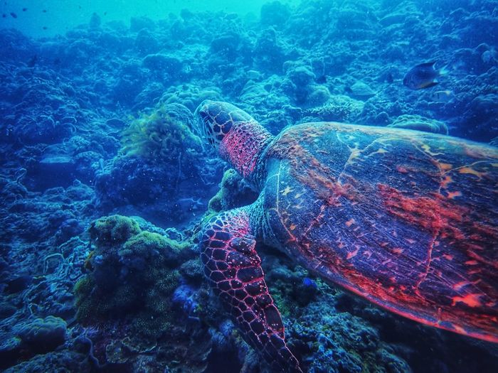 Strike a pose! SCUBA Scuba Diving Turtle Underwater underwater photography Underwater Diving Photography Sea Life Olympus UnderSea Water Multi Colored Backgrounds Sea Full Frame Pattern Blue Close-up Sea Life Floating In Water