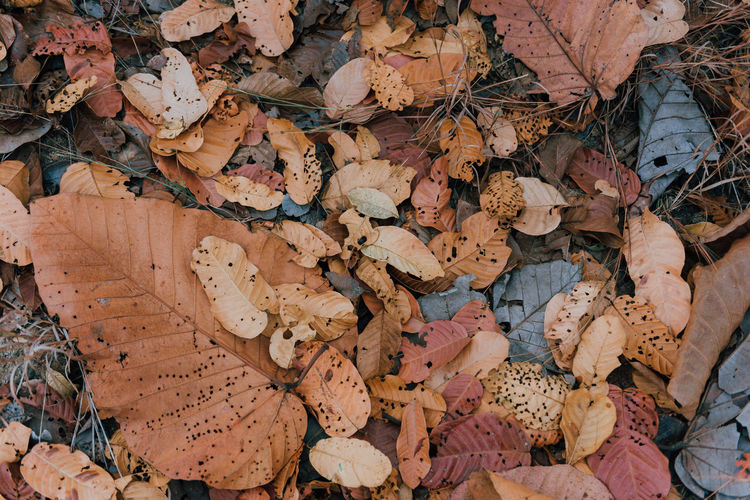 Natural 🍂 No People Nature Full Frame Land Close-up Plant Part Dry Day Natural Condition Nikonphotography WallpaperForMobile Wallpaper Autumn Change Backgrounds Falling Large Group Of Objects Abundance Dried Vulnerability  Leaves Outdoors High Angle View Autumn Collection Fragility Field Leaf Fall