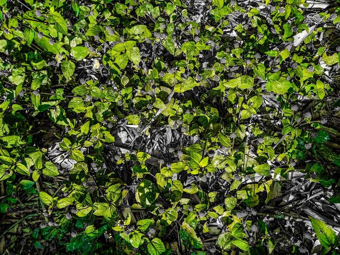Full Frame Backgrounds Green Color Day Outdoors No People Nature Close-up EyeEmNewHere Black Background Beauty In Nature Leaf Plant Be. Ready.