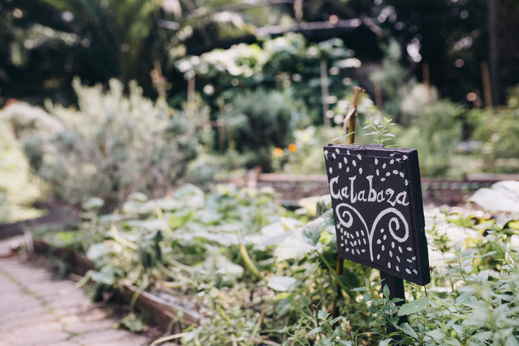 Chalkboard sign for pumpkin in a vegetable urban garden in roma district, mexico city, mexico