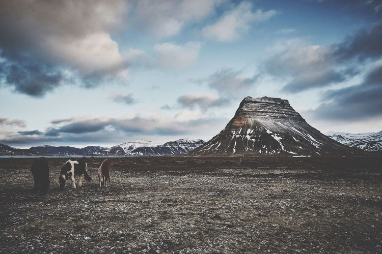 Horses of Iceland Mountain Photo Of The Day Landscape Horse Travel Life Travel Photography Travel Destinations Iceland Landscape Clay Hayner Photo Sky Cloud - Sky Architecture Built Structure Nature No People Outdoors Travel Destinations Tourism Day Environment Travel Dusk