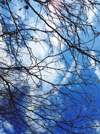 Bondi trees First Eyeem Photo