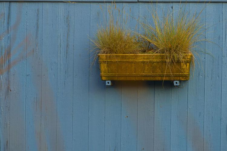 A flower box on