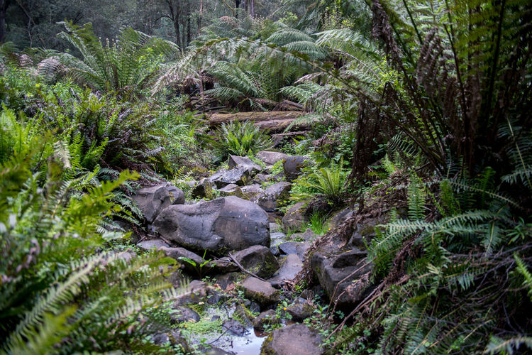 Jungle Rainforest Australia Nature Forest Wildlife Wild Victoria Plant Tree Land Rock Growth No People Water Day Solid Rock - Object Beauty In Nature Tranquility Animal Animal Wildlife Outdoors Tropical Climate Non-urban Scene Green Color