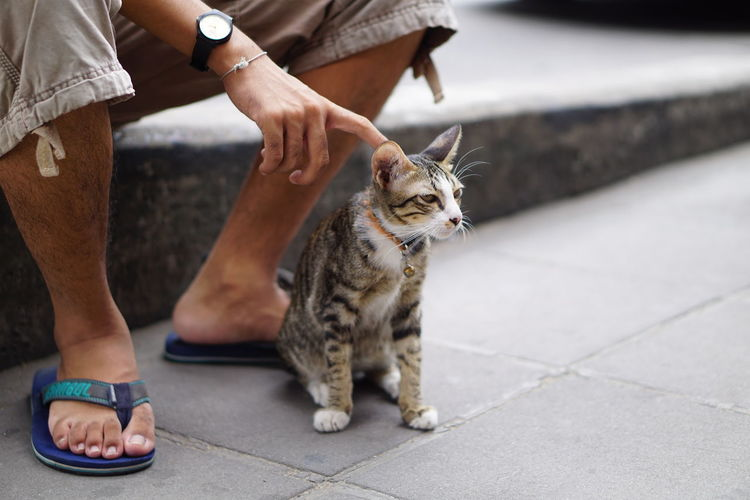 Friendly cat Pets Adult Domestic Cat One Animal Domestic Animals People One Person Human Body Part Mammal Outdoors Low Section Street View Streetphotography Comfort Comfortable Today :) Friendly Friendly Cat Cat Cats 🐱
