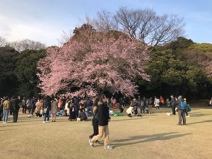 Hanami Tree Large Group Of People Real People Nature Day Growth Outdoors Park - Man Made Space Branch Sky Beauty In Nature Men Leisure Activity Women Flower Freshness People Adult Tokyo Shinjuku