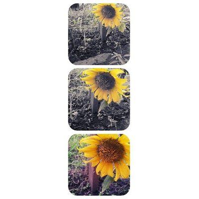 花,盛開得再怎麽鮮艷,也躲不過枯萎的命運.??