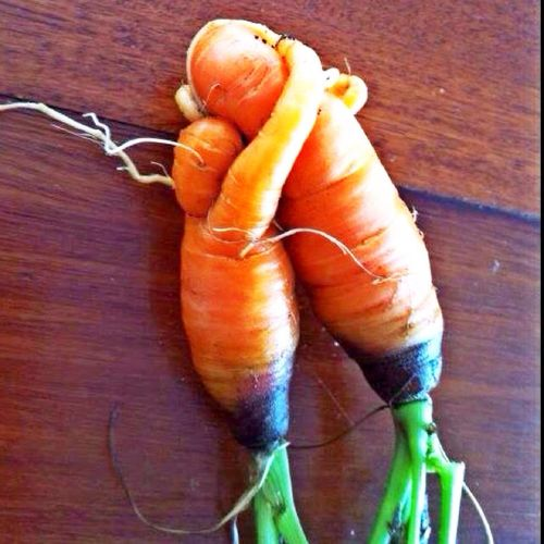 Cute Carrots...??? Check This Out Taking Photos Look Wierd Lol In Love