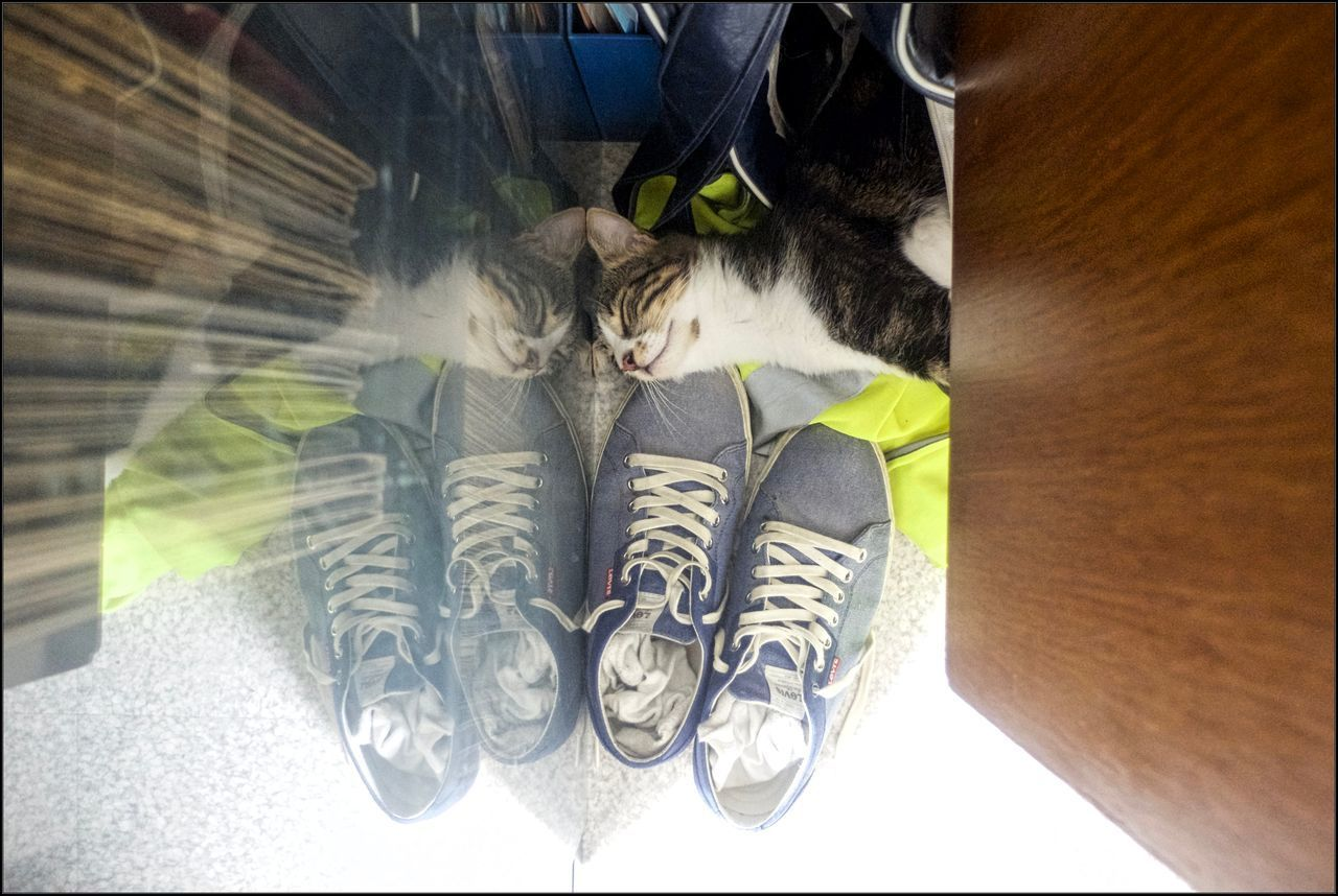 animal, animal themes, one animal, mammal, low section, domestic animals, human leg, domestic, pets, indoors, domestic cat, vertebrate, cat, feline, shoe, body part, high angle view, human body part, relaxation, one person, flooring, human foot, whisker, pet owner