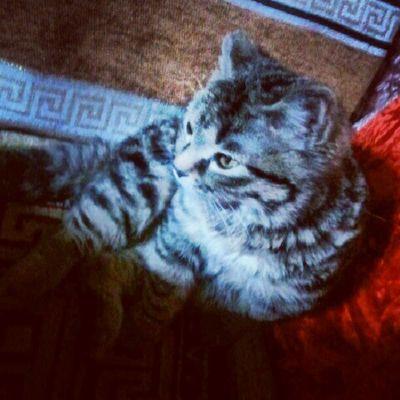 мое девочка кошка