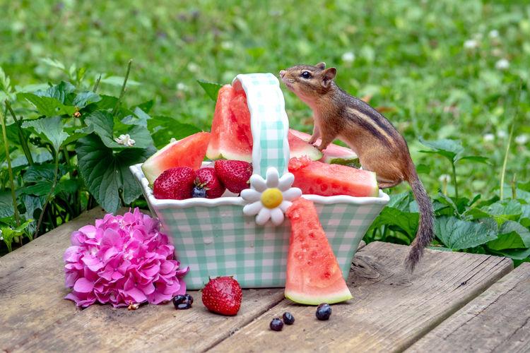 Close-up of fruits eating fruit