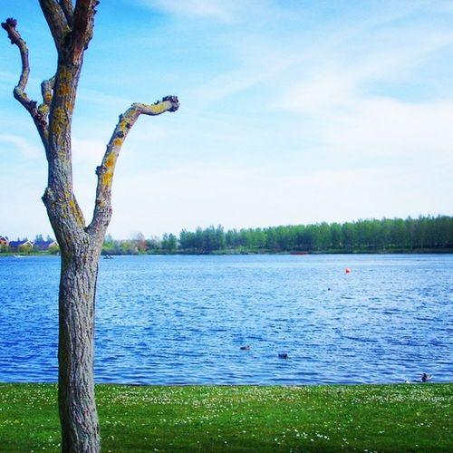 Sometimes skies look so peaceful it emits awe. Nature Sky Lake Tree weather clouds cloudporn skylovers skypainters mothernature ladd00 myphototime scenery canada explorecanada travelcanada prairielife prairies prairieskies landoflivingskies Saskatchewan sask exploresask yqr regina