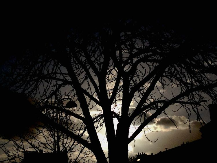 Place Nation Sunset_collection Tree_collection  Tree Blacktree EyeEmBestEdits Colorsky Sky Collection Sky Collection