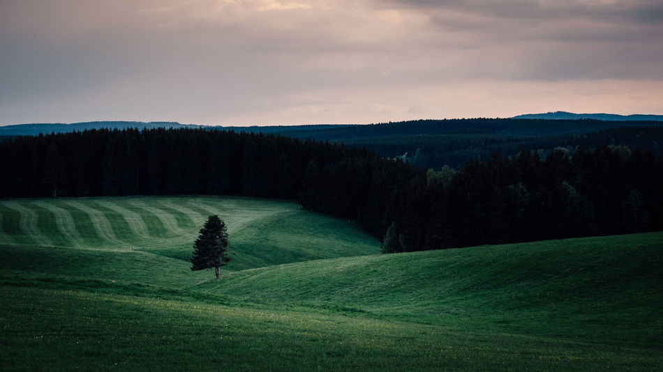 Still und Leise am Abend Agriculture Beauty In Nature Cloud - Sky Day Field Grass Growth Harz Landscape Nature No People Outdoors Rural Scene Scenics Sky Tranquil Scene Tranquility Tree