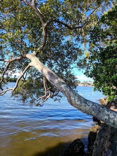 Riverside Tree Water Branch Sky Calm Stream Ocean Tranquility Rippled Woods Waterfront Horizon Over Water Fishing Pole Mid Distance Countryside Pebble Beach Standing Water Lakeside Sandy Beach Shore Tranquil Scene Growing Scenics
