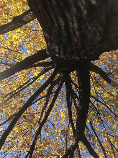 Fall 2 Low