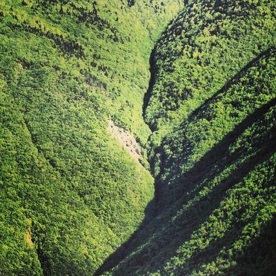 Arşiv Doğa Artvin Orman yeşil v.s ?