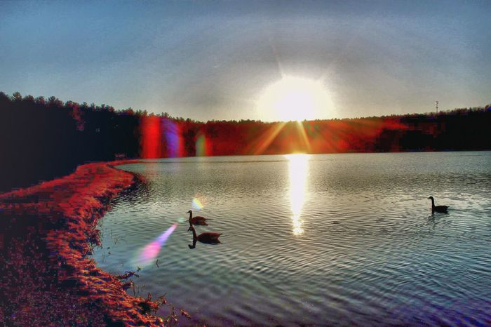 Early bird catches the _____. A) Beautiful photo. B) attitudes of others who haven't had their coffee yet. C) Worm...Its always worm, Dan...Enough of the play on words! Happy Friday, everyone! Check This Out Sunrise Sunrise_sunsets_aroundworld Sunrise_Collection Water Water Reflections Lensflare Lens Flare Water_collection Reservoir Massachusetts Share Your Adventure April Showcase April 2016 Springtime Spring Spring Has Arrived Spring2016 Spring 2016