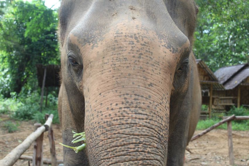 Connected By Travel Elephant Elephant Nature Park Thailand Animals