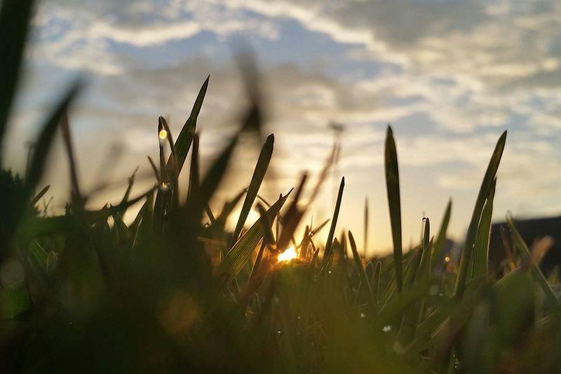 Water Drops Water Drop Grass Grassland Grass And Sky Grass And Sun Grass And Sunrise Morning Sunrise Morning Light Morning Sun Morning Glow Morning View Morning Sky Water Droplets
