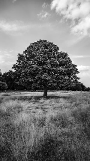 Black & White Cloudscape EyeEm EyeEm Best Edits EyeEm Best Shots EyeEmBestPics London Black And White Photography Blackandwhite Cloud - Sky Day Field Grass Land Landscape Nature No People Outdoors Sky Tranquil Scene Tranquility Tree