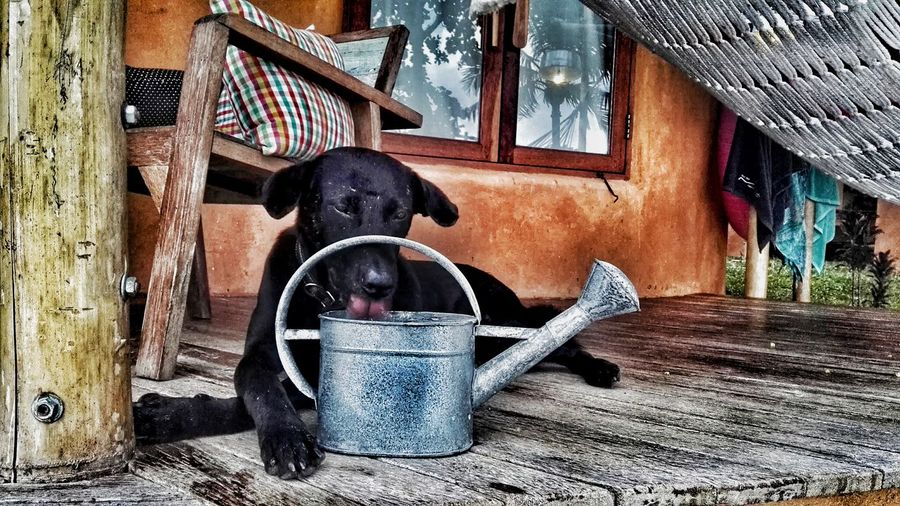 Dog sitting in barn