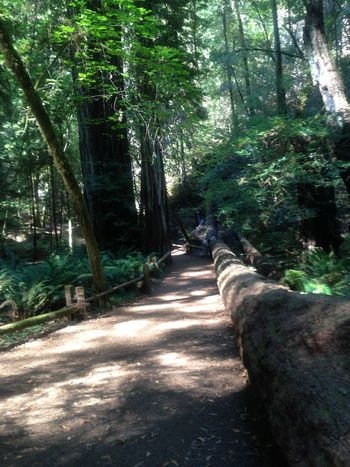 Forest IPhoneography Light And Shadow Nature Park Pathway Redwoods Sonomacounty Trees