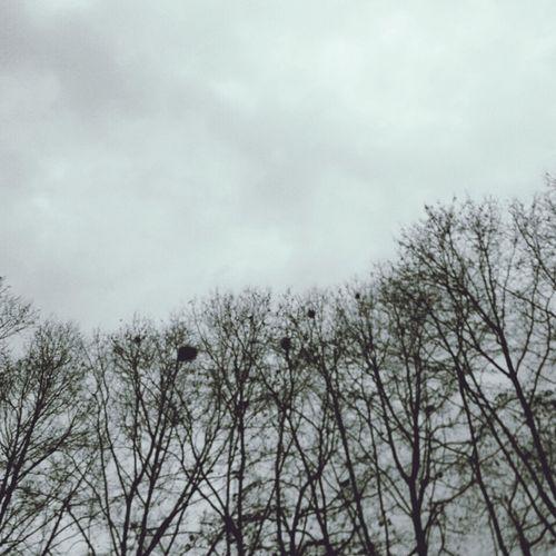The Birds Home