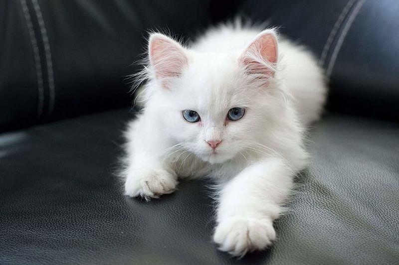 Kittens Cats Of EyeEm Cat