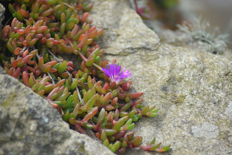 Close-up of succulent plant on rock