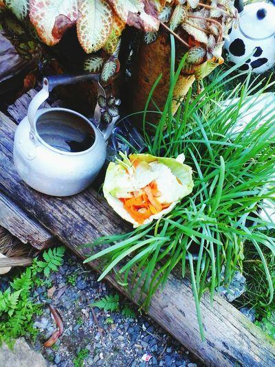 restes de plat aux légumes Freshness Plant Outdoors Green Color No People Overhead View Springtime Freshness