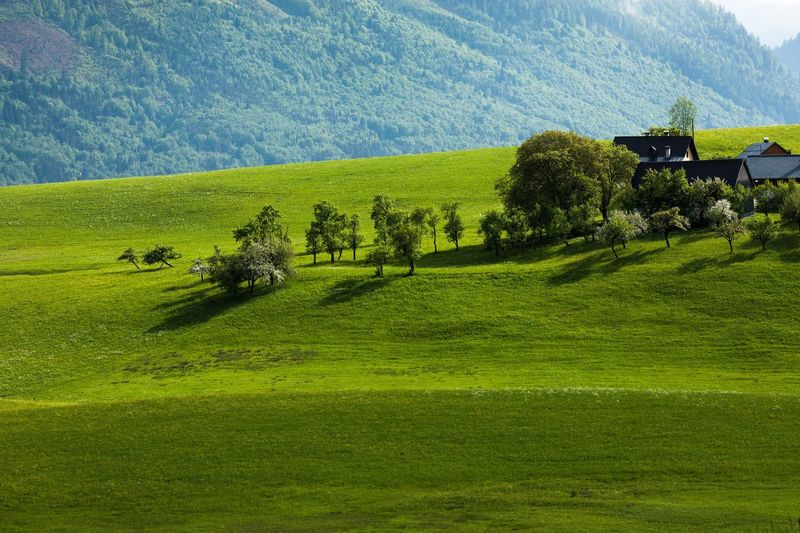 Scenic view of grassy field by houses