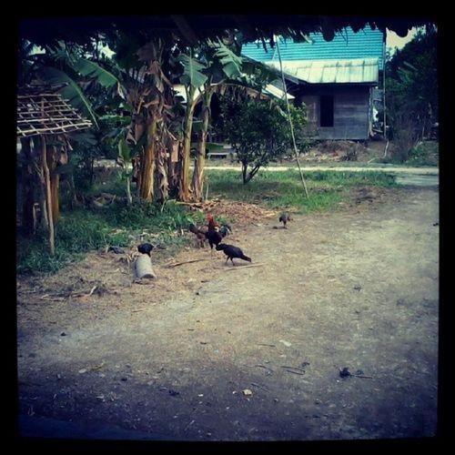 Tambancatur Kapuas
