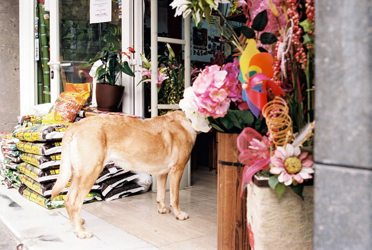 Dog standing by potted plant