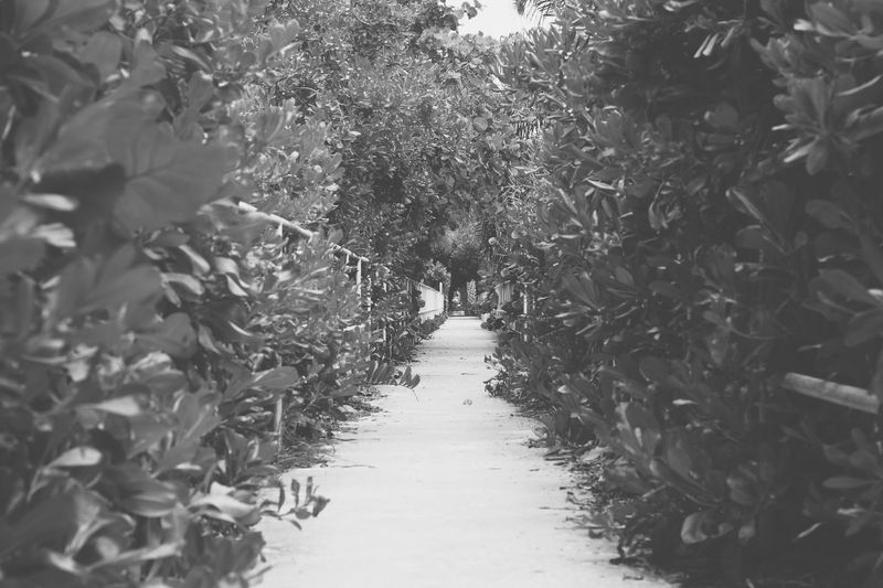 Footpath amidst plants and trees