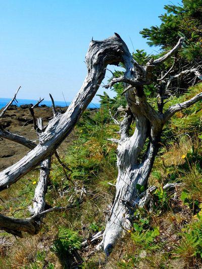 Depoe Bay Oregon Tree Trunk Nikon_photography My Photo Album ♡ Mix Filter