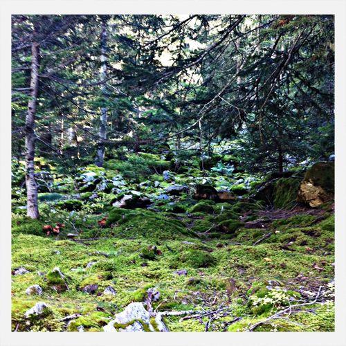 Balade dans les bois.