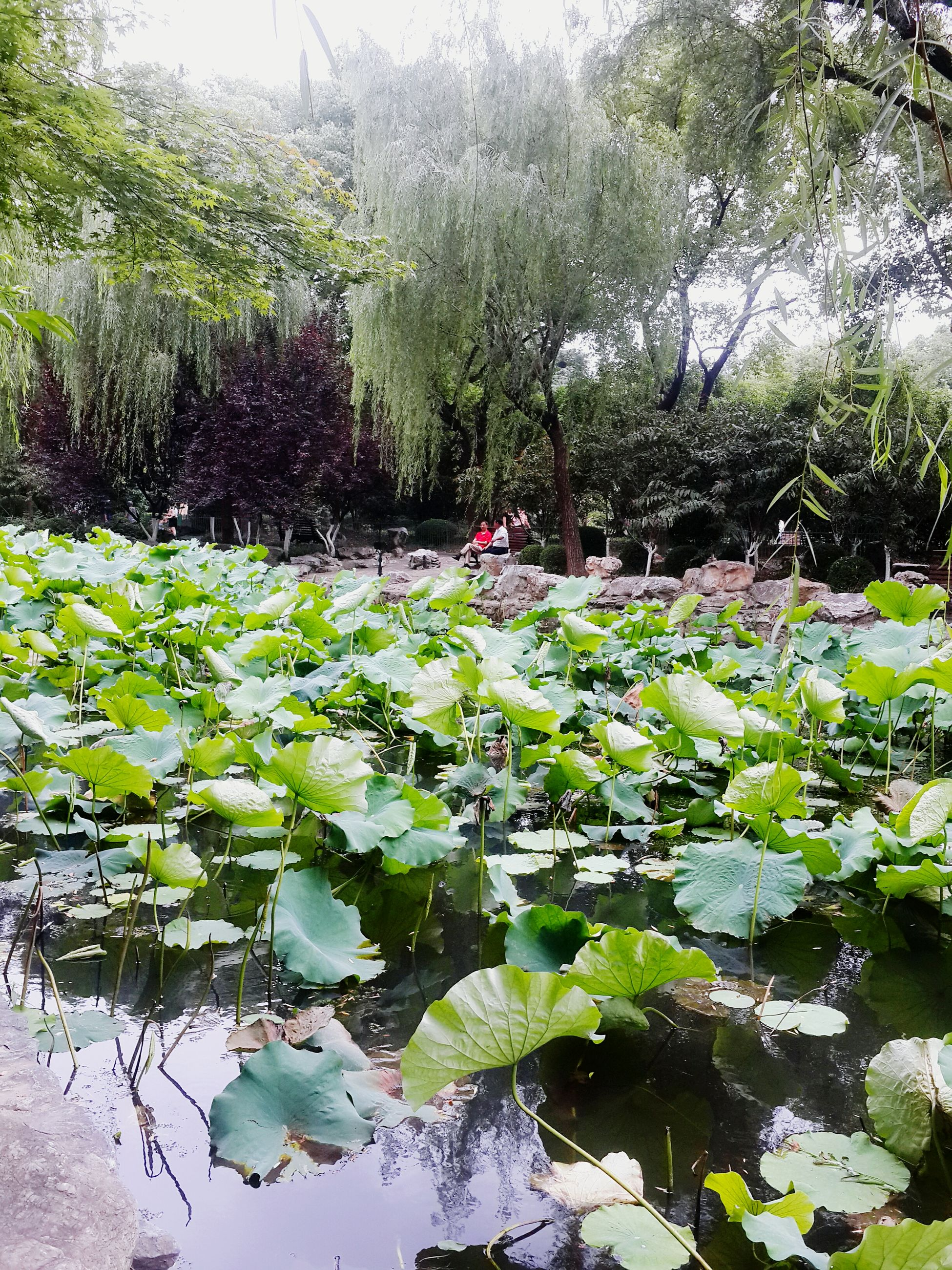 growth, flower, plant, green color, leaf, beauty in nature, nature, tree, freshness, tranquility, fragility, growing, water, park - man made space, day, blooming, tranquil scene, pond, outdoors, green