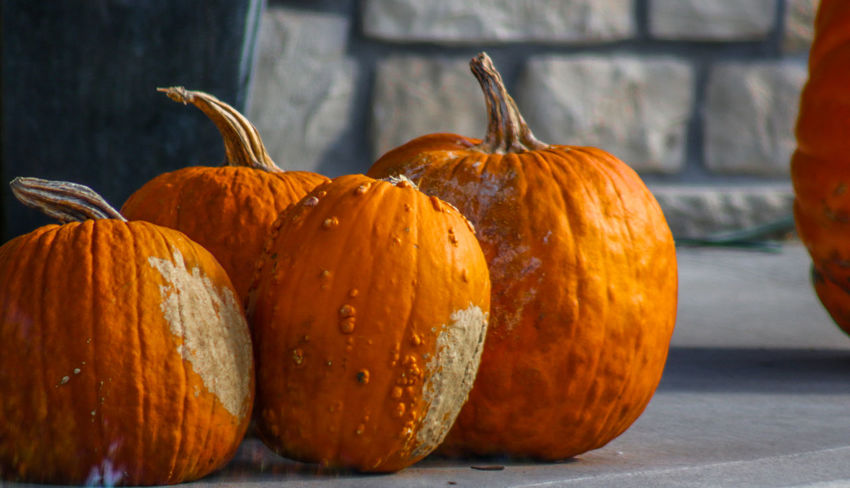 Pumpkins Close-up Day Food Food And Drink Freshness Halloween Healthy Eating No People Orange Color Outdoors Pumpkin Vegetable
