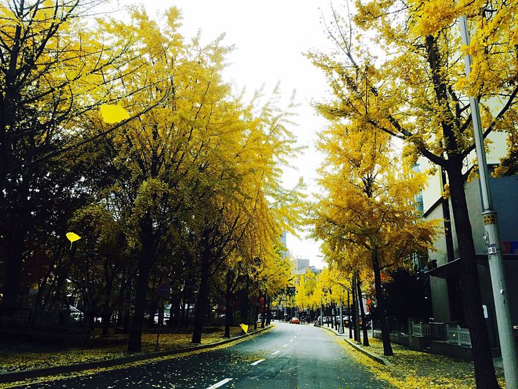Autumn Yellow Trees Streetphotography Autumn Colors Autumn Leaves Autumn Collection IPhoneography Iphonephotography Iphonography Check This Out Hello World Taking Photos Enjoying Life Relaxing Hi! Fallen Leaves ByAlex