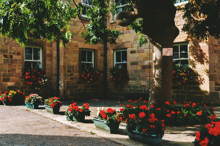 Bakewell Flower Tree City Illuminated Cityscape Architecture Building Exterior Flowerbed