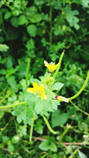 Yellow Flower Wild Flowers Greenery Flower Nature Check This Out