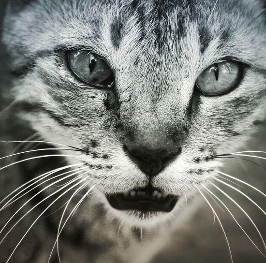 OldCat Eyes Are Soul Reflection Shallow Depth Of Field Eyes HIDDENAGENDA Fresh On Eyeem