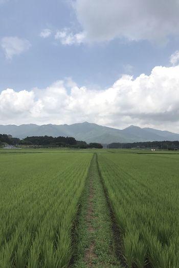 田んぼからの足尾山 親戚の葬儀に参列してセレモニーホールを出たら晴れ間が見えるにわか雨でした‥‥‥