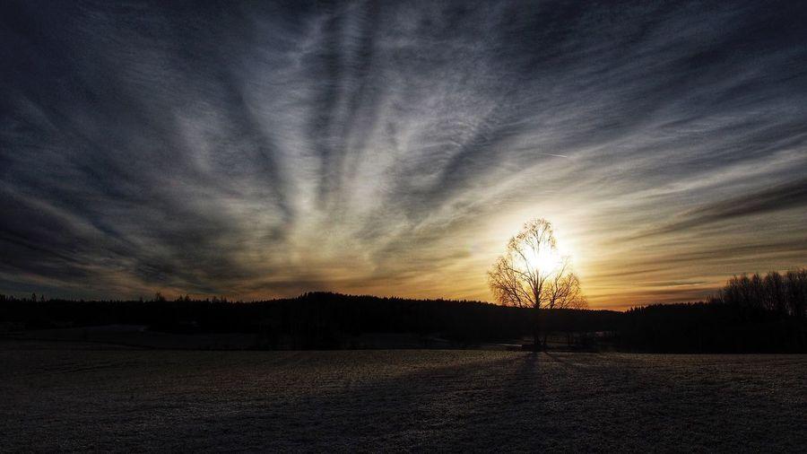 Glowing birch