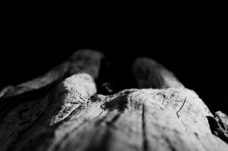Close-up of dry leaf on wood against black background