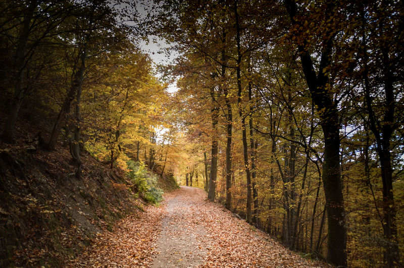Autumn in the forest Travel Photography Autumn Landscape Autumn colors No People The Week on EyeEm Colors Of Autumn autumn mood Autumn Collection Tree Autumn Leaf Sunlight Sky Pathway Woods vanishing point Empty Road Fall Dirt Track Diminishing Perspective The Way Forward