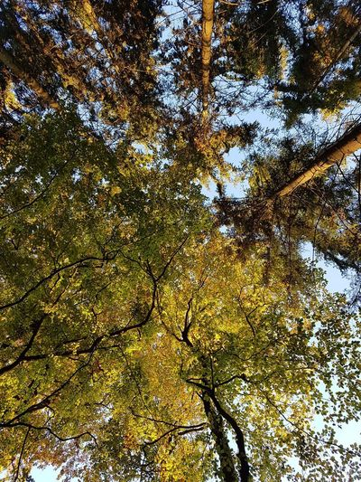 Tree Plant Growth Low Angle View Beauty In Nature No People Tranquility Tree Canopy  Nature Branch Day Autumn Sky Outdoors Backgrounds Tree Trunk Trunk Full Frame Directly Below Forest Change Natural Condition