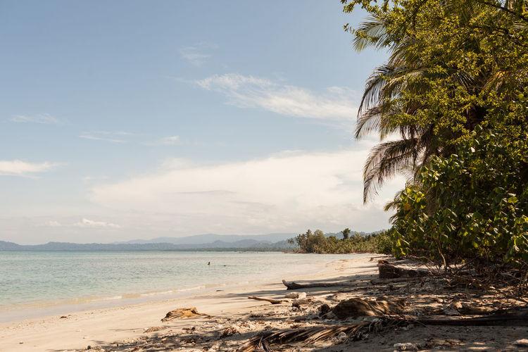 Karibik Cahuita National Park Costa Rica Karibik Meer Palm Tree Palmen Strand Travel Beach Blue Sky Caribian Cloud - Sky Ocean Sun ☀ Water First Eyeem Photo